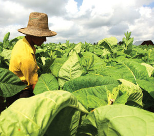 Tobacco-farmers