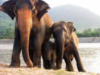 Mobil Van Tabrak Gajah di Thailand, 6 Tewas