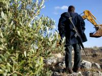 kebun zaitun Palestina (foto:aljazeera)