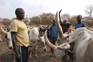 SouthSudanCattlebig