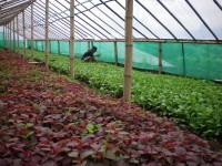 Pengusaha Brunei Minati Agrobisnis Indonesia