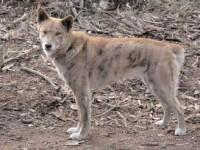 Di Cina Seratus Anjing Liar Dikubur Hidup-hidup