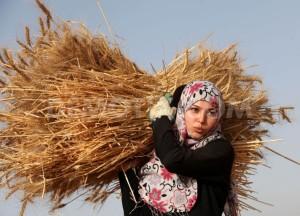palestinian-farmers