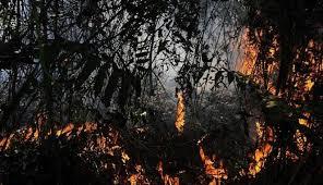 hutan bakar