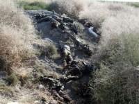 90-an Anggota ISIS Tewas, 21-nya di Tangan Pasukan Suku Mosul