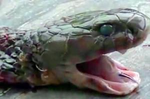kepaka ular