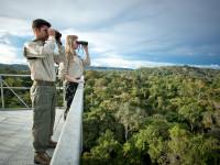 Brazil Bangun Menara Raksasa di Tengah Hutan Amazon