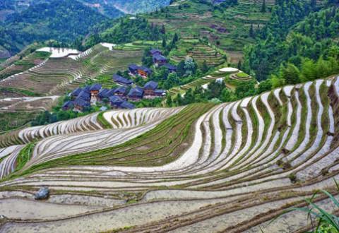 Untuk Kedaulatan Pangan, 1 Juta Hektar Sawah Siap Dibuka