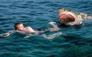 sharkattack_1778841a