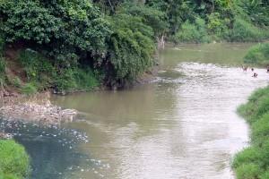 Dulu air sungai mengaliri Desa Pintubosi, dan Desa Gasaribu ini jernih, kini keruh. Ikan-ikanpun mati. Foto: Ayah S Karokaro, mongabay.co.id