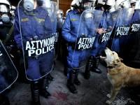 """Anjing Demonstran"" Terkenal Yunani, Akhirnya Meninggal"