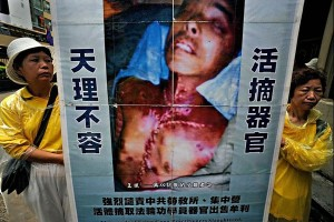 china organt harvesting