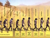 Penciptaan Manusia : Antara Tafsir Maudhu'i dan Tafsir Ilmi (2)