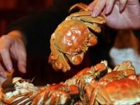 Menteri Susi Larang Penangkapan Kepiting dan Lobster Bertelur
