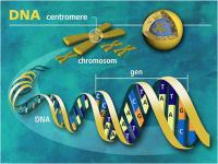 Kamus Genetika di Alam Akhirat
