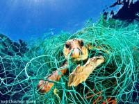 Indonesia Negara Nomor Dua Paling Banyak Buang Sampah Di Laut!