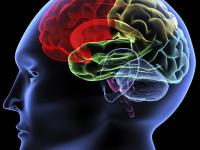 Makanan Sehat, Cerdaskan Otak