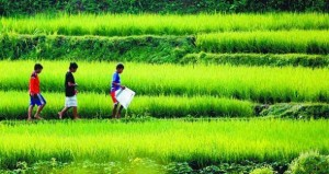 pertanian2