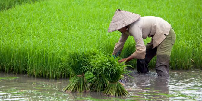 Image result for petani pahlawan bangsa yang dilupakan