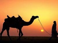 Mengapa Al-Quran Menyuruh Kita Memperhatikan Unta?