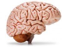 Hindari 7 Kebiasaan Ini Jika Tak Ingin Otak Bermasalah