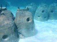 """Intip """"Stupa"""" Unik di Bawah Laut Gugus Derawan"""