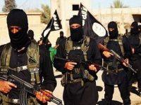 Tiga Anggota ISIS Tewas Diamuk Babi Liar