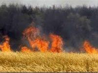 FAO: Perang Sebabkan Lahan Pertanian di Suriah Rusak Berat