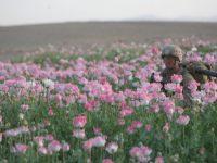 Jadi Produsen Utama Opium, Akankah Korea Utara Jadi Sasaran CIA?