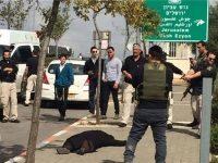 Warga Zionis Tambrak Empat Bocah Palestina