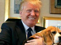 Korut Sebut Ancaman Amerika sebagai Gonggongan Anjing
