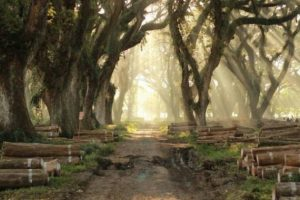 "Ayo Mampir ke Hutan ""Lord of The Rings"" di Bayuwangi"