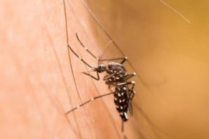 11 Tempat Ini Bisa Jadi Sarang Nyamuk di Rumah