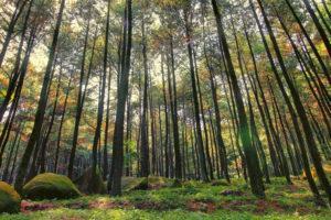 Ngabuburit di Wisata Pinus Yogyakarta, Bak Negeri Dongeng!