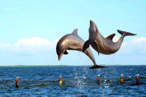 Bertemu Lumba-Lumba Cantik di Teluk Kiluan Lampung