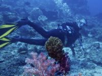 Indahnya Alam Bawah Laut di Kepulauan Banda