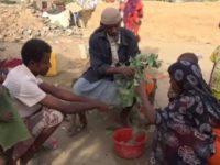 Krisis Pangan, Ribuan Warga Yaman Terpaksa Santap Daun Pohon