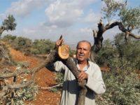 Petani Gaza Diserang Pasukan Israel