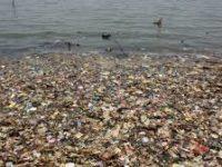 Lima Spesies yang Terimbas Polusi Plastik