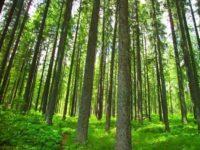 Demi Atasi Krisis Iklim, Denmark Luncurkan Penggalangan Dana Pertama di Dunia untuk Bangun Hutan